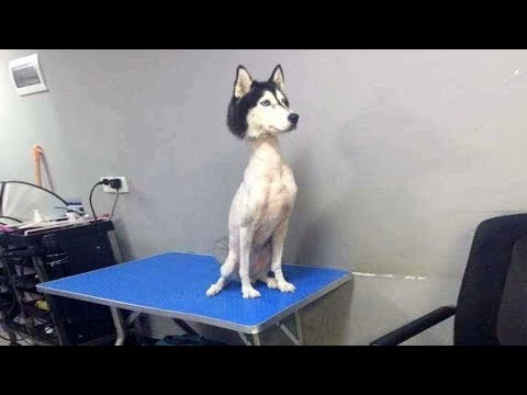 これ見たら笑うでしょww動物の面白い動画!